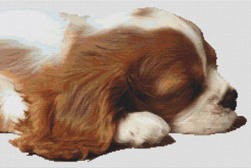 Sleepy Cavalier Pup