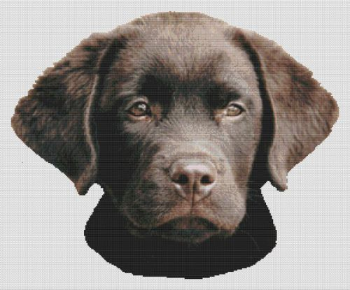 Chocolate Lab Pup 2 PDF