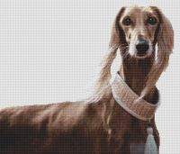 Saluki Beauty PDF