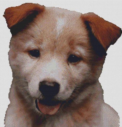 Red Australian Cattle Dog Puppy