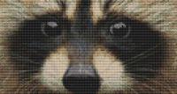 Through the Eye - Raccoon PDF
