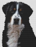 Bernese Mountain Dog 2 PDF
